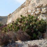 190401-2 (84) Cala et Playa el Playazo (Cabo de Gata-Andalousie)_1