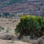 190402-3 (18) El Cortijo del Fraile (Cabo de Gata-Andalousie)