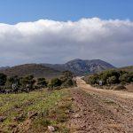 190403-2 (107) de San Jose à Playa de Genoveses (Cabo de Gata - Andalousie)