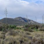 190403-2 (109) de San Jose à Playa de Genoveses (Cabo de Gata - Andalousie)