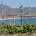 190403-2 (128) de San Jose à Playa de Genoveses (Cabo de Gata - Andalousie)