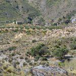 190406-2 (19) Piste Sierra de Cabrera (Sierra de Cabrera-Andalousie)