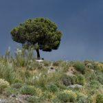 190406-2 (34) Piste Sierra de Cabrera (Sierra de Cabrera-Andalousie)