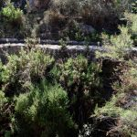 190407-2 (46) Barrage Isabel II (Sierra Alhamilla-Andalousie)