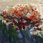 190408-4 (24) Nijar - Marchand de cactées (Cabo de Gata-Andalousie)