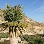 190408-4 (35) Nijar - Marchand de cactées (Cabo de Gata-Andalousie)
