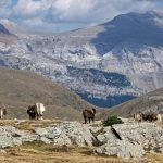 170929-Avant canyon Anisclo-Marche Nerin Mondoto Anisclo supérieur Ouest Nerin (164)