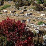 170929-Avant canyon Anisclo-Marche Nerin Mondoto Anisclo supérieur Ouest Nerin (173)
