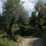 190612-1 (27) San Vicente de Labuerda (Sobrarbe-Aragon)