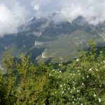 190615-1 Au dessus de Bestue (Sobrarbe-Araragon) (2)