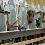 190809-1 (18) Fromagerie de chèvre Meyrals
