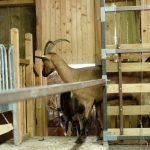 190809-1 (23) Fromagerie de chèvre Meyrals