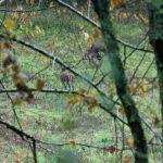 191128-1 (1) Vus au petit matin de la terrasse - Périgord noir (secteur Meyrals)