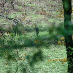 191128-1 (2) Vus au petit matin de la terrasse - Périgord noir (secteur Meyrals)