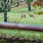 191128-1 (5) Vus au petit matin de la terrasse - Périgord noir (secteur Meyrals)