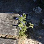 200706-(197) Saint-cirq Lapopie (Lot-Quercy blanc)