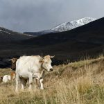 201007-(126) Sestrales alta (Aragon-Sobrarbe)