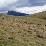 201007-(151) Sestrales alta (Aragon-Sobrarbe)