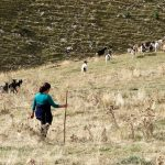 201007-(156) Sestrales alta (Aragon-Sobrarbe)_1
