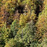 201010-(116) Cascades Cinca et La Larri (Aragon-Sobrarbe)