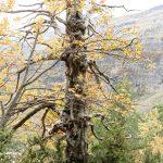 201010-(149) Cascades Cinca et La Larri (Aragon-Sobrarbe)