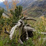 201010-(157) Cascades Cinca et La Larri (Aragon-Sobrarbe)