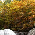 201010-(201) Cascades Cinca et La Larri (Aragon-Sobrarbe)