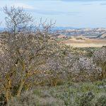 150308-Bardenas Blanca - Route de Ermitage del Yugo à Arguedas (18)