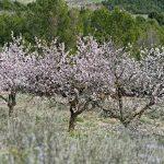 150308-Bardenas Blanca - Route de Ermitage del Yugo à Arguedas (23)