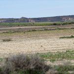 150308-Bardenas El Plano - Piste Lac del Ferial à Ermitage del Yugo (45)