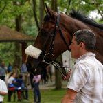 150702-Dax Courses de chevaux (108)