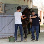 150702-Dax Courses de chevaux (135)