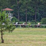 150702-Dax Courses de chevaux (156)