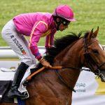150702-Dax Courses de chevaux (190)_2