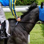 150702-Dax Courses de chevaux (195)_2