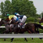 150702-Dax Courses de chevaux (198)
