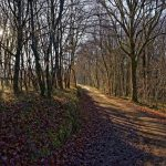 151225-Fin d'année en Périgord noir (19) - Copie