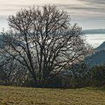 151227-Fin d'année en Périgord noir (30) - Copie