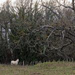151228-Fin d'année en Périgord noir (17)_1 - Copie