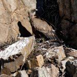 160405-parc national de monfrague (Estremadure) (125)_1