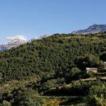 160628-Tella (La montagne dorée) (Sobrarbe-Aragon) (109)