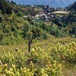 160628-Tella (La montagne dorée) (Sobrarbe-Aragon) (162)