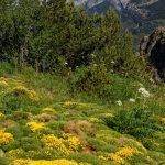 160628-Tella (La montagne dorée) (Sobrarbe-Aragon) (167)