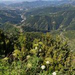 160628-Tella (La montagne dorée) (Sobrarbe-Aragon) (175)