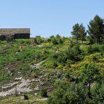 160628-Tella (La montagne dorée) (Sobrarbe-Aragon) (218)