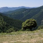 160628-Tella (La montagne dorée) (Sobrarbe-Aragon) (251)