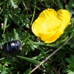 170513-Canyon d'Anisclo supérieur (Sobrarbe) (78)