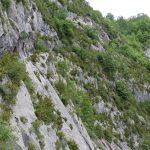 170516-Sentier de la mâture (Pyrénées atlantiques) (46)