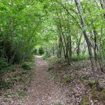 170516-Sentier de la mâture (Pyrénées atlantiques) (55)