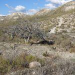 171219-Marche de Playa de Plomo à playa de Enmedio (Cabo de Gata-Andalousie) (14)